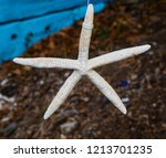 beautiful decoration with sea... | Shutterstock . vector #1213701235