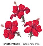 hand drawn red hibiscus... | Shutterstock .eps vector #1213707448