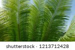 green pattern of fresh cycad... | Shutterstock . vector #1213712428