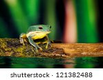Small Blue Green Frog On A Stick