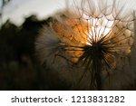 one fluffy white dandelion in a ... | Shutterstock . vector #1213831282
