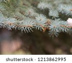 twigs of the blue christmas...   Shutterstock . vector #1213862995