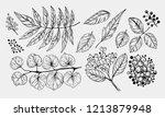 leaves set. hand drawn... | Shutterstock .eps vector #1213879948