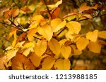 utumn colored background  green ... | Shutterstock . vector #1213988185