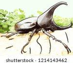 rhinoceros beetles or beetle... | Shutterstock .eps vector #1214143462