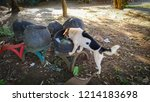 Small photo of Dogs rummage garbage