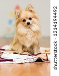 a dog of german spitz breed... | Shutterstock . vector #1214194492