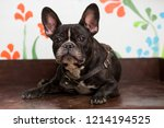 the dog of the breed of the... | Shutterstock . vector #1214194525