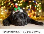 a black labrador dog wearing a... | Shutterstock . vector #1214194942