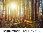 Autumn Forest Windbreak Covere...
