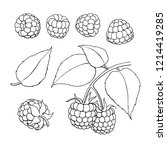 raspberry drawing. isolated... | Shutterstock . vector #1214419285