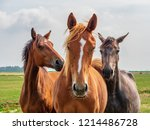 Curious Horses Are Standing In...