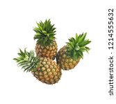 pineapple fruit with slices... | Shutterstock . vector #1214555632