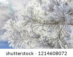 conifer branches close up with... | Shutterstock . vector #1214608072