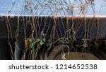 entwined prayer strings ... | Shutterstock . vector #1214652538