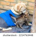 cute scene. stray little kitten ... | Shutterstock . vector #1214763448