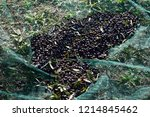 flat sheets for table olives... | Shutterstock . vector #1214845462