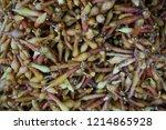 close up finger root  krachai ... | Shutterstock . vector #1214865928