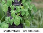 natural background with plant... | Shutterstock . vector #1214888038