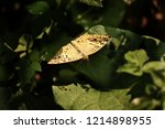 common wood land butterfly ... | Shutterstock . vector #1214898955