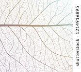 background texture leaf. vector ... | Shutterstock .eps vector #1214916895