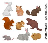 cute rodents set  small wild... | Shutterstock .eps vector #1215063028
