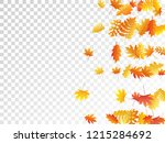 oak  maple  wild ash rowan... | Shutterstock .eps vector #1215284692