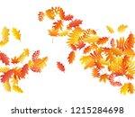 oak  maple  wild ash rowan... | Shutterstock .eps vector #1215284698