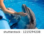 female coach with dolphin.... | Shutterstock . vector #1215294238