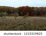 wild natural forest of old... | Shutterstock . vector #1215319825