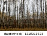 wild natural forest of old... | Shutterstock . vector #1215319828