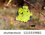 autumn colorful barberry red... | Shutterstock . vector #1215319882