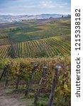 langhe region vineyards in... | Shutterstock . vector #1215338182