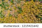 boundary between coniferous... | Shutterstock . vector #1215421642