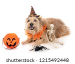 pyrenean shepherd in front of... | Shutterstock . vector #1215492448
