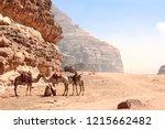 four camels in wadi rum desert  ... | Shutterstock . vector #1215662482