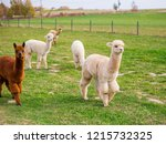 colorful group of alpacas on... | Shutterstock . vector #1215732325