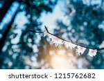 winter landscape   pine trees... | Shutterstock . vector #1215762682