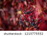 red autumn foliage  filled... | Shutterstock . vector #1215775552