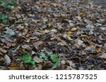 leaves of ground next to park...   Shutterstock . vector #1215787525