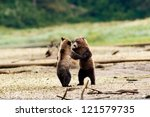 Two Grizzly Bears Dancing....