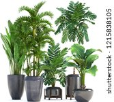 plant isolated on white...   Shutterstock . vector #1215838105