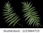 fern leaves  realistic vector... | Shutterstock .eps vector #1215864715