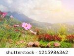 cosmos flowers in meadow field... | Shutterstock . vector #1215986362