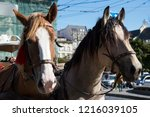 horses in the center of the old ... | Shutterstock . vector #1216039105