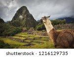 alpaca in machu picchu   Shutterstock . vector #1216129735