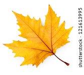 Plane Tree Leaf Isolated On...