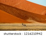 adult oryx antelope standing... | Shutterstock . vector #1216210942