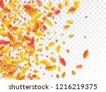 oak  maple  wild ash rowan... | Shutterstock .eps vector #1216219375