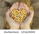 Hands That Hold Corn In Heart...